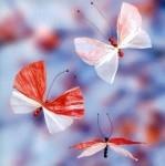 Бабочки из бумаги. Фото. Вот такие красивые бабочки могут получиться