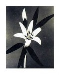 Цветок лилии своими руками из ткани